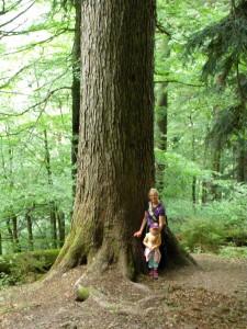 einer der 3 Urwaldbäume