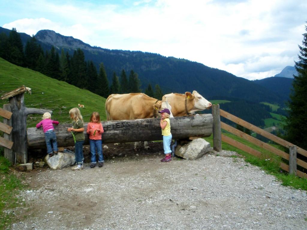 Erfrischung für Vieh und Mensch