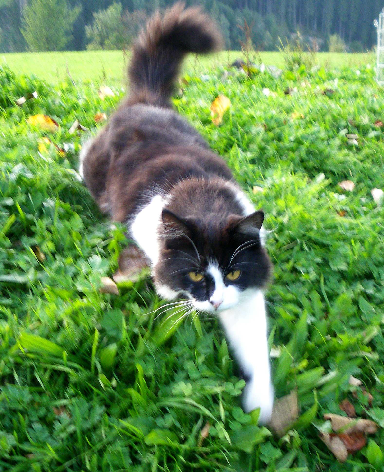 Katze am Haflingerhof