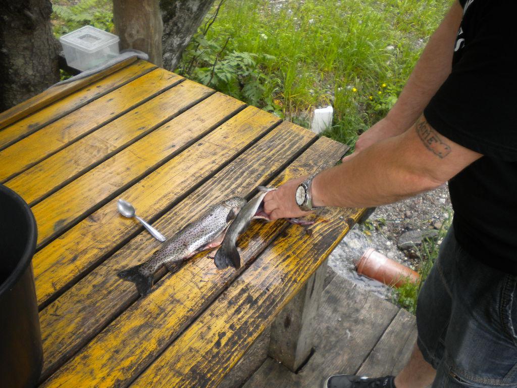 """Fachgerechtes """"Ausnehmen"""" der Fische vor der Zubereitung"""