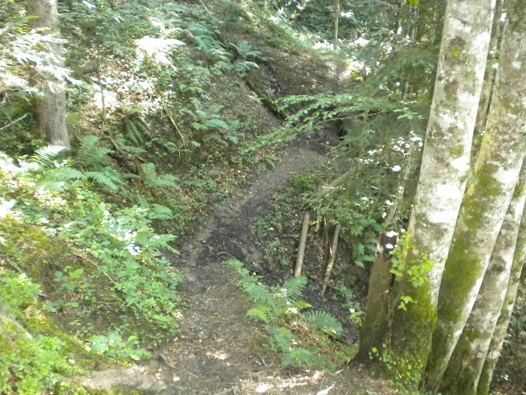 Nordic Walking in der Natur im Salzburger Land