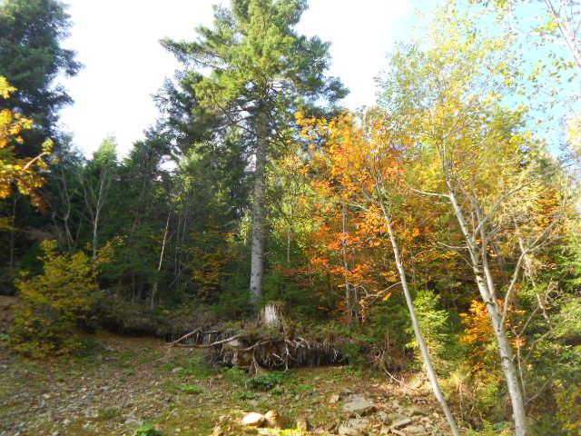 Herbstsonne genießen im Salzburger Land