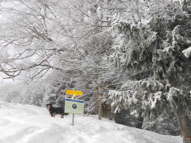 Auch Hunde sind gern gesehen bei Winterwanderungen