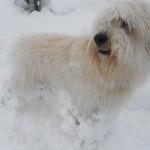 Lange Haare und Schnee = Schneebälle