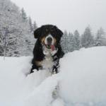 Spaß im Schnee für die Vierbeiner