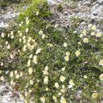 Blumen im Früh-Sommer
