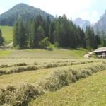Almwanderungen im Salzburger Land