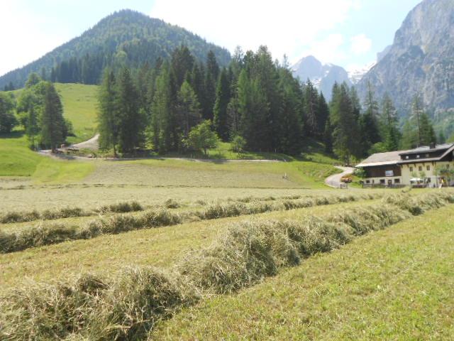 Almwanderung im Tennegebirge im Juni 2013