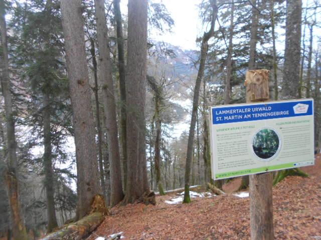 Winterlicher Urwald im Lammertal in St. Martin am Tennengebirge