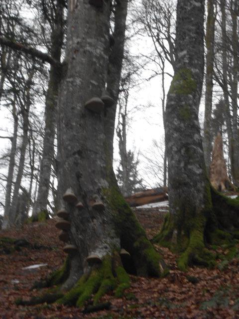 Urwald im Lammertal im Tennengebirge