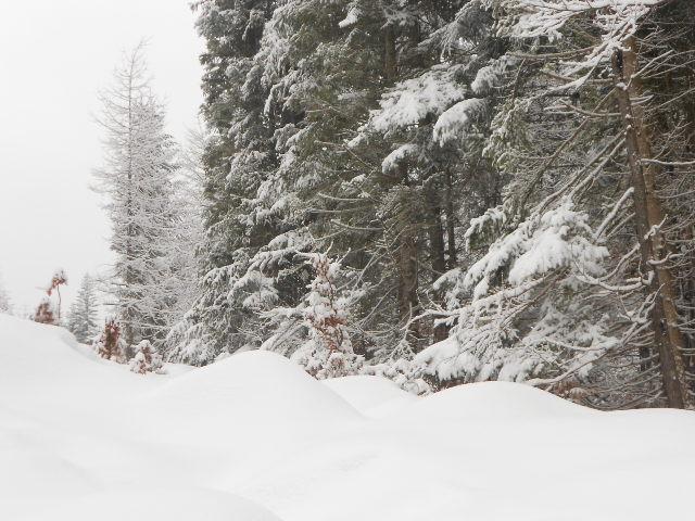 Schneebedeckte Bäume im Lammertal