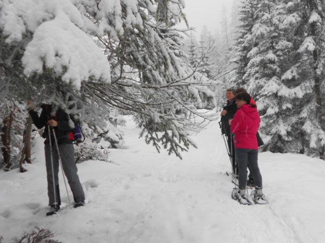Schneeschuhwanderer im verschneiten Wald im Lammertal