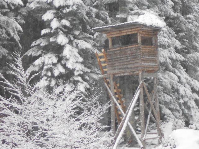 Ein Hochstand am Waldrand im Winter