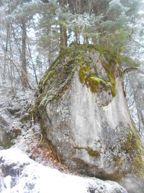 Moosbewachsener Fels