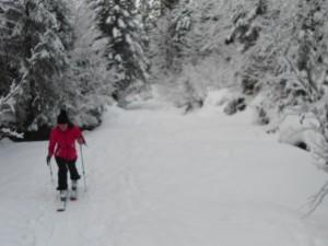 Tief verschneite Wälder