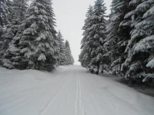 Skitour durch den verschneiten Wald im Tennengau