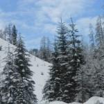 Verschneiter Winterwald im Salzburger Land