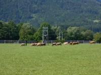 Frisches saftiges Gras für die Milchproduzenten