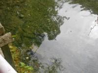 Angeln und Grillen bei den Lammertaler Fischteichen
