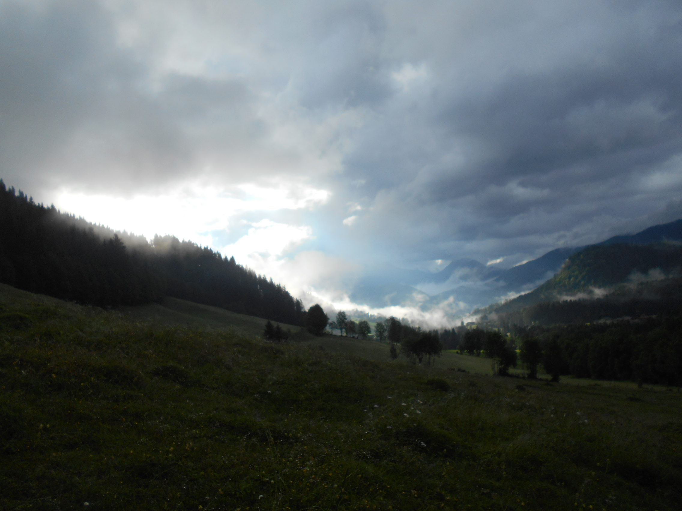 Wanderung auf den Edelweisskogel im Juni 2015