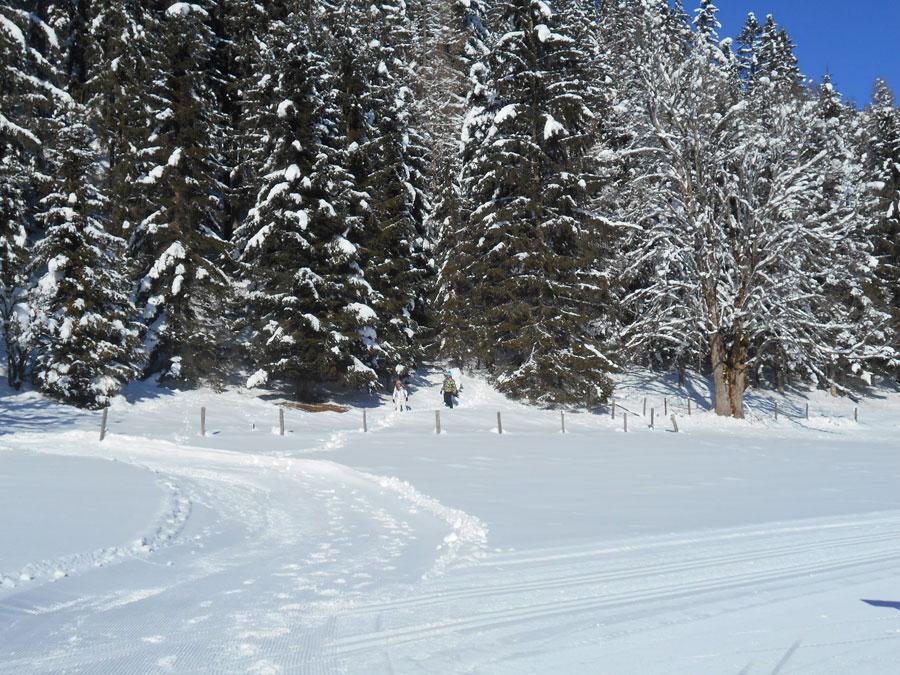 Schneeschuhwandern langlaufen stmartin 7 laemmerhof 39 s blog for Fischteich im winter