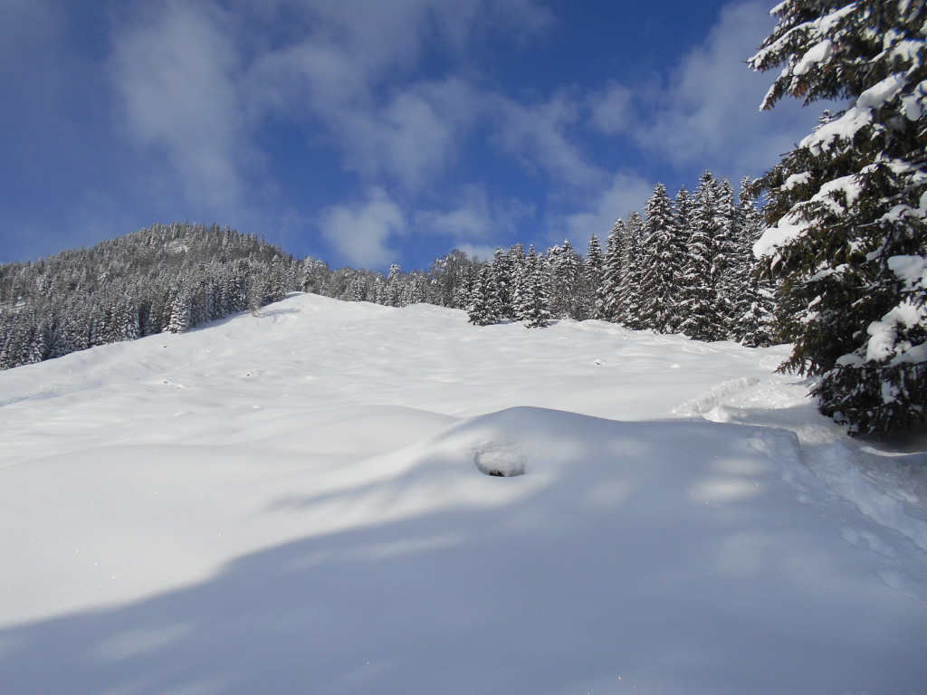 Lammertaler Urwald im Winter