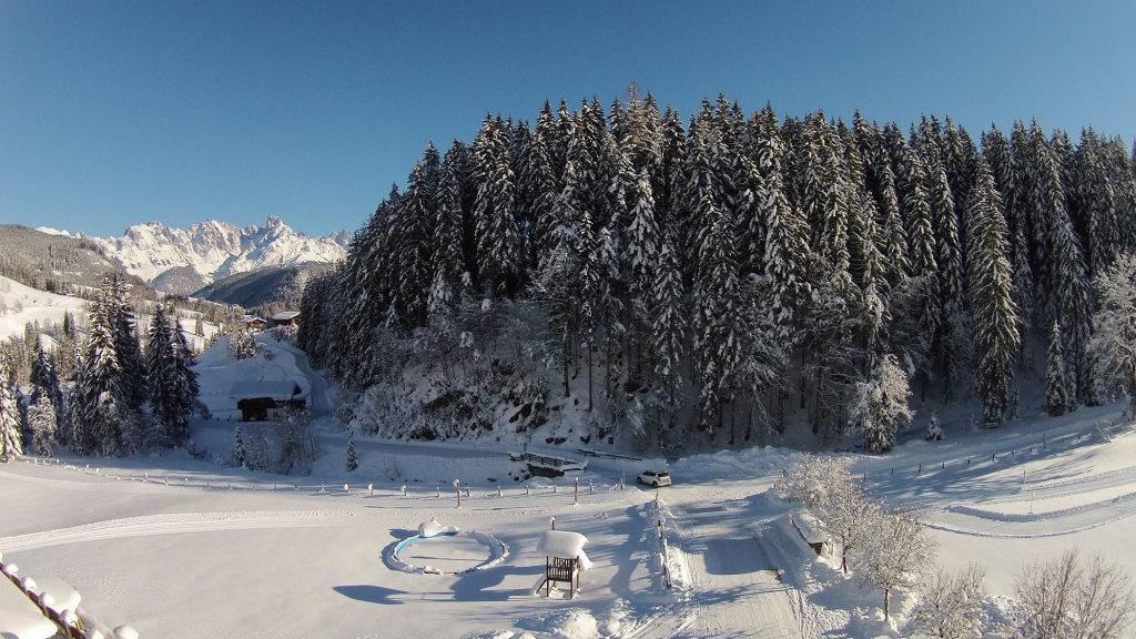 Winterwald im Lammertal