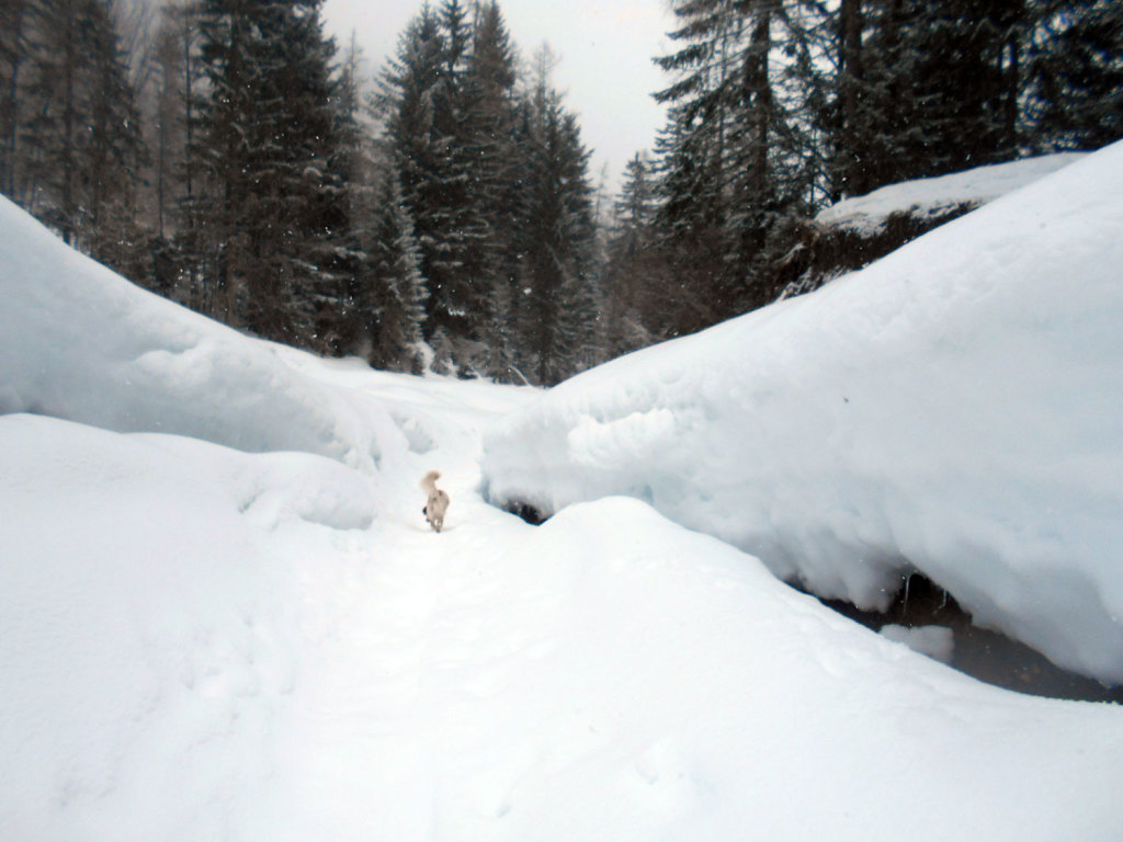 schneeschuhwanderung-aualm-maerz-13
