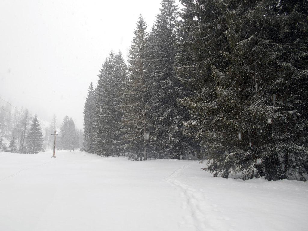 schneeschuhwanderung-aualm-maerz-4