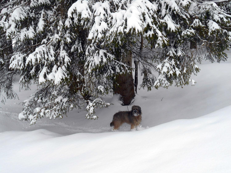 Skitour lammertal maerz 11 laemmerhof 39 s blog for Fischteich im winter