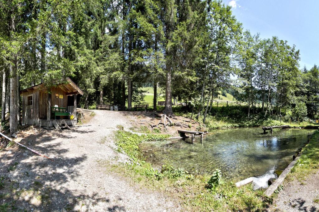 Fischteich im Lammertal im Salzburger Land