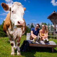 Kuh auf der Alm in St. Martin