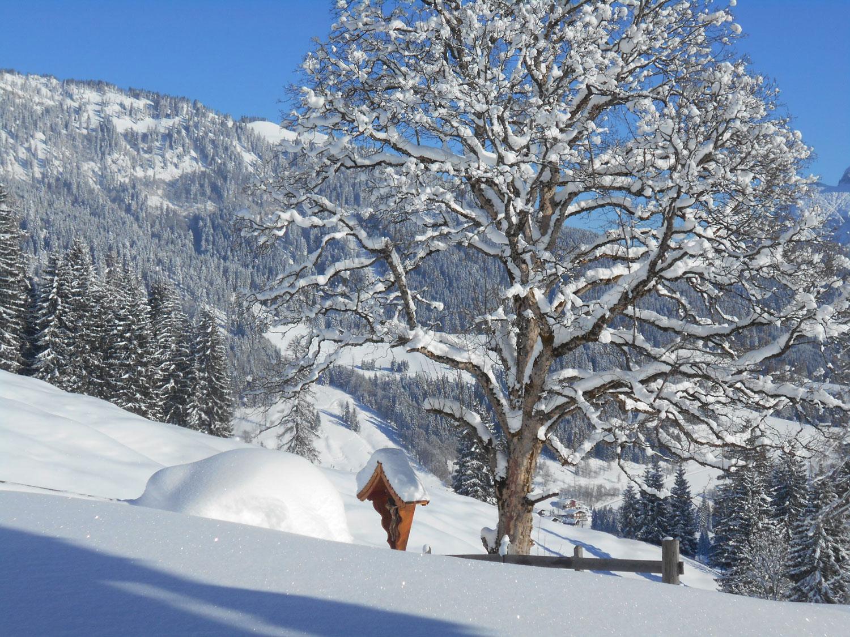 Schneeschuhwanderung spiessalm kw2 8 laemmerhof 39 s blog for Fischteich im winter