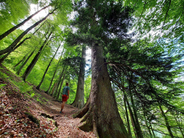 Ausflugsort im Salzburger Land für Kinder
